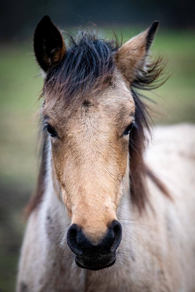 horses jan